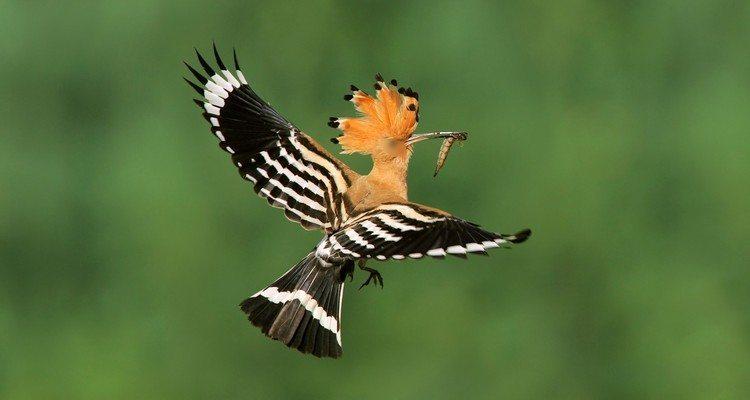 Burung Hud-hud Pun Tidak Rela Allah Disekutukan