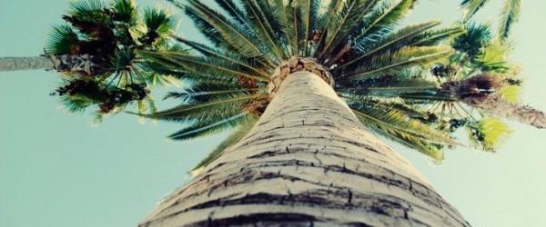 Perumpamaan Seorang Mukmin Seperti Pohon Kurma