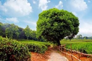 Agar Pohon Keimanan Tumbuh dan Berbuah